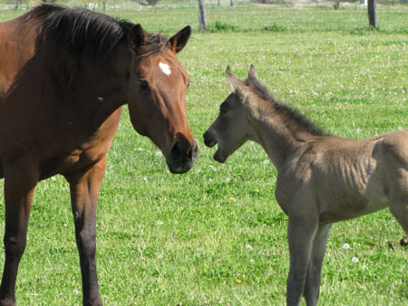 A mare and her foal in a pasture.