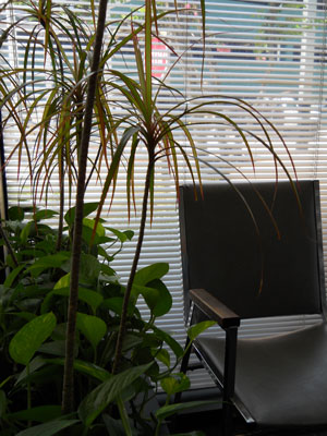 An office plant and a chair sit by window blinds